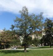 Lípa - náměstí Barikád